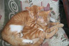 Ramsés José dormindo abraçado a Pimpinha Maria - 5 meses