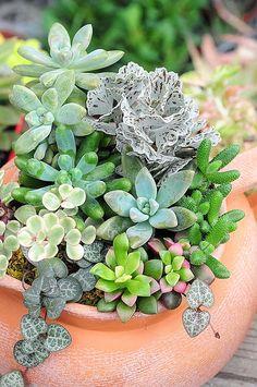 多肉植物組合盆栽 Succulent Arrangement04 | chen kuntsan | Flickr