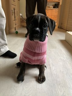 Boxer Baby Girl ❤️