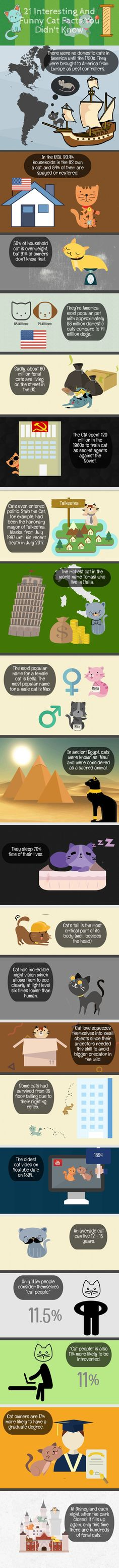 Infographic: 21 Interesting and Funny Cat Facts You Didn't Know check this fantastic photo from Katzenworld