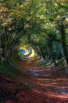 Fascinating Photographs of Forest Paths to another world (42)