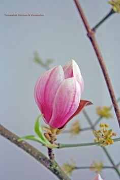 Magnoliatakken en Cornus mas in een vaas. #voorjaar #sakura #japan
