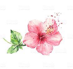 Hibiscus flower, pintura de acuarela hibiscus flower pintura de acuarela - arte vectorial de stock y más imágenes de 2015 libre de derechos