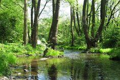 Naučná stezka Údolím Botiče Trips, River, Plants, Outdoor, Viajes, Outdoors, Traveling, Plant, Outdoor Games
