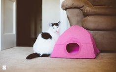 namiot dla kota zrób to sam