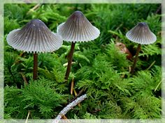 Mushroom Fungi, Garden Tools, Stuffed Mushrooms, Forest Floor, Bird, Enchanted, Nature, Flowers, Plants