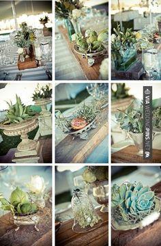 Rustic and farm style decor achieved through using succulent plants for decoration Succulent Centerpieces, Wedding Centerpieces, Wedding Decorations, Wedding Ideas, Wedding Tables, Elegant Wedding, Rustic Wedding, Terrarium Wedding, Cactus