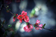 Photograph Spring by Plamen Kojuharov on 500px