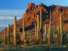 desert wallpaper - Google Search