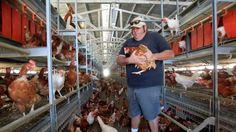 the goal wasn't no cages for chickens but empty chickens ... no chickens for no one. Putting farmers out of business one farm at a time. Nine years after California voters required that egg-laying hens be given more space, animal-rights activists on Tuesday proposed an initiative requiring all of the birds to be kept cage-free.