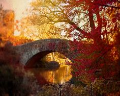 A song of Red for Central Park, Rustic Fall, Autumn photography, orange, red, brown, NY Wall Decor, 5x7 print on Etsy, $15.00