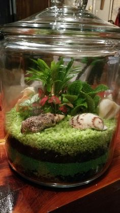 Succulent Plants, Planting Succulents, Jardin Zen Miniature, Plant Night, Zen Office, Terrarium Ideas, Cucumber, Garden Ideas, Shells