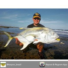 @tarpon_brazil monster jack crevalle!!!! That's a big ass fish! #monster #monsterfish #monsterjack #killedit #instalike #instadaily #instafollow #picoftheday #bigfish #bigassfish #bigassjack #fish #fishing #fishinglife #angler #anglerapproved #wednesday #recordfish #catchingfish #offshore #offshorelife #offshorefishing by monsterfishingpics