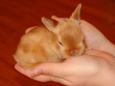 ~ Baby Mini Satin Rabbit ~