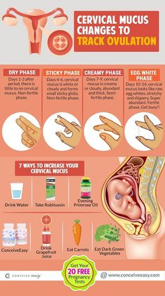 Pin on Ovulation & Menstruation Cervical mucus is the fluid that is secreted from the woman's cervix. During the ovulation time span this mucus wi Fertility Smoothie, Fertility Foods, Chances Of Getting Pregnant, Get Pregnant Fast, Pregnant Funny, What Is Ovulation, Mucus Plug, Pcos Pregnancy, Internet