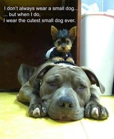 I don't always wear a small dog....