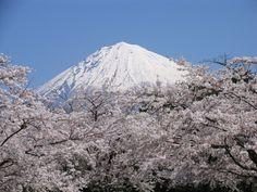 富士山&さくら