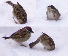 poor little bird, head stuck in snow