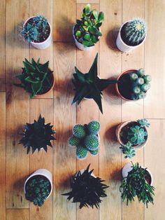Kac Essex Road, Plants, Plant, Planets