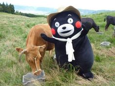 Kumamon is at the ranch!Dawww look at his little hat!