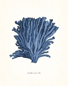 Vintage Sea Coral Series Indigo Blue Plate 5  by BelleMerGraphics
