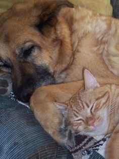 Tigger and our other dog Tasha before  Two content fur-babies...memories with love you two RIP.