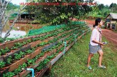 die 92 besten bilder von garten erdbeeren pflanzen. Black Bedroom Furniture Sets. Home Design Ideas