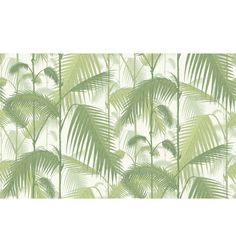 95/1001 Palm Jungle - Tapeta ścienna Contemporary Restyled Cole and Son