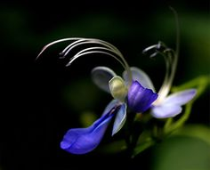 by TruemarkPhotography