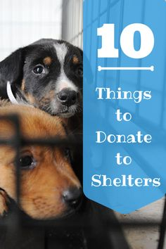 10 Things to Donate to Animal Shelters