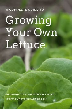 Container Gardening Ideas With news of yet another lettuce related E-coli outbreak, all of us are wondering what we can do to protect our families. Growing your own lettuce is one great solution to the problem. Fall Vegetables, Organic Vegetables, Growing Vegetables, Gardening Vegetables, Succulent Gardening, Container Gardening, Indoor Gardening, Urban Gardening, Hydroponic Gardening