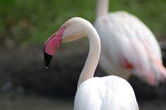 Portfolio Multimedeia: Pink Flamingos Ex Libris, Culture Travel, Pink Flamingos, Travel Photos, Flamingos, Travel Pictures, Cultural Trips
