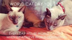 World Cat Day You Say