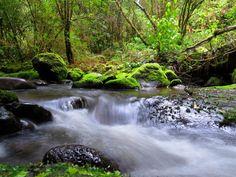 Región de la araucanía. Fotografía: Daniel Gomez-Lobo Fehling