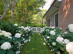 A picturesque pathway of Hydrangea 'Tardiva' and Hydrangea 'Annabelle' resides on the south side of the property, situated under neighboring shady white pine trees. Design by Barry Block