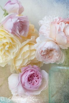 Soft Pastel Peonies ~ Feminine Charm & Prettiness ✿⊱╮ by VoyageVisuel Love Rose, My Flower, Pretty Flowers, Roses David Austin, Colorful Roses, Deco Floral, English Roses, Pretty Pastel, New Wall