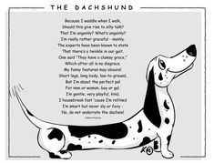 Want to discover art related to dachshund? Check out inspiring examples of dachshund artwork on DeviantArt, and get inspired by our community of talented artists. Dachshund Funny, Dachshund Breed, Dachshund Quotes, Dapple Dachshund, Mini Dachshund, Daschund, Pet Quotes, Scottish Terrier, Memes Humor
