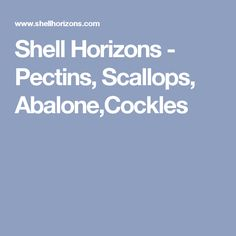 Shell Horizons - Pectins, Scallops, Abalone,Cockles