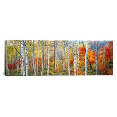 Fall Trees, Shinhodaka, Gifu, Japan by Panoramic Images Triptych Gallery Wrapped Canvas Artwork - 48 Canvas Artwork, Canvas Art Prints, Painting Prints, Canvas Wall Art, Art Paintings, Gifu, Tree Canvas, Panoramic Images, Detail Art
