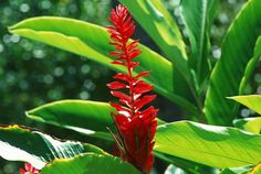 Totally Crazy Relatively easy Tropical Garden: The Secret to Rising Masses of Fo. - Totally Crazy Relatively easy Tropical Garden: The Secret to Rising Masses of Fo… – Totally Cr - Tropical Garden, Plants, Hardy Plants, Jungle Gardens, Tropical Garden Plants, Plants Uk, Tropical Plants, Garden Plants Uk, Tropical Plants Uk