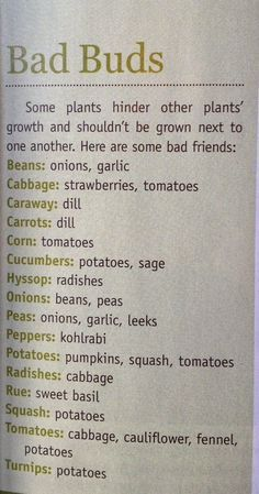 Urban Farm Mag - not companion plants..