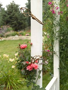 Use Curtain Tiebacks to help control and guide Growing Vines and Climbing Roses