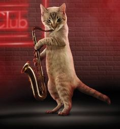 A favorite of the ladies saxy cat