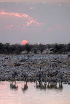 zebras at sunset, Etosha National Park, Namibia.  Photo: mariusz kluzniak, via Flickr