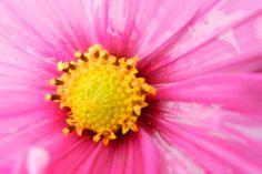 Garden flowers - Extreme closeup - 219