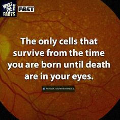 Which is why you need to look after them!