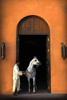Saddled at Le Selman. Marrakech Morocco ~ I would LOVE to go there. Looks like my ride is saddled and waiting for me