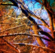 "January 26, 2013 #4  ""Do Trees Dream In Color?""  ©2013 Cindy White"