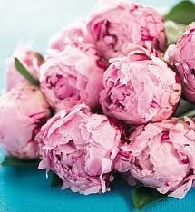 peonies may be my favorite flower... although I disliked them for many years due to a childhood trauma involving ants and my peony sniffing nose... thankfully, I'm over it, and back in love with this beautiful flower.