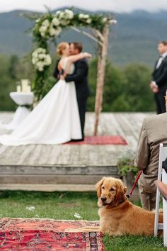 C + A Trapp Family Lodge in Stowe, VT is part of Dog wedding photos - Trapp Family Lodge wedding in Stowe Vermont captured by Stowe Wedding Photographers The Light and color Wedding Locations California, California Wedding, Chiba, White Roses Wedding, Wedding Flowers, Gold Wedding, Wedding Dresses, Ns 200, Photos With Dog